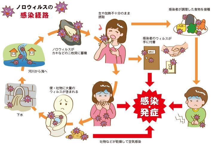 ノロウィルスの感染経路